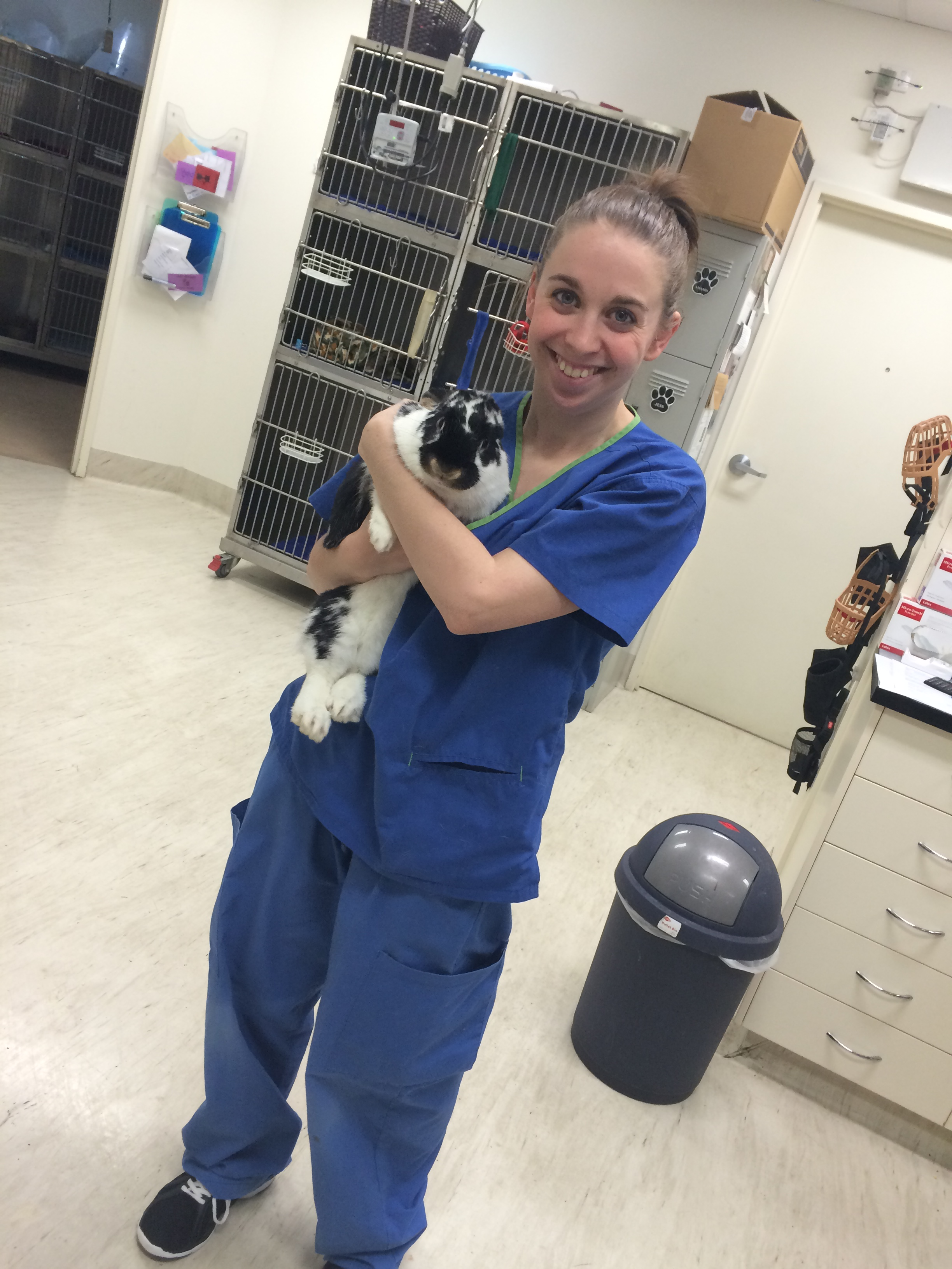 veterinary nursing how to become a vet nurse in australia