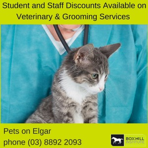 Veterinary Services and Dog Grooming Service at BHI